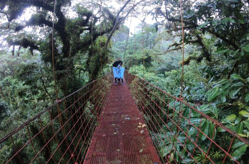 Monteverde Cloud Forest Hanging Bridge