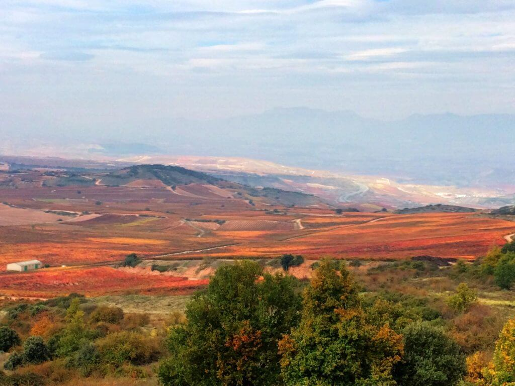 La Rioja Vineyards in Fall