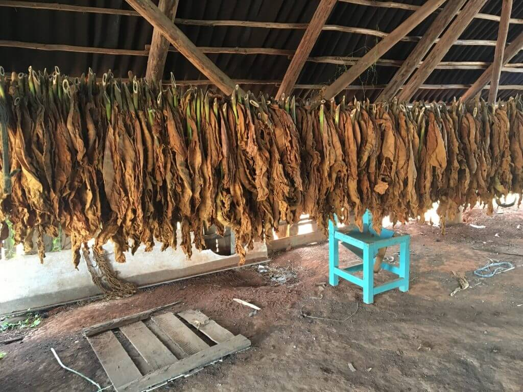 Vinales Tobacco Production