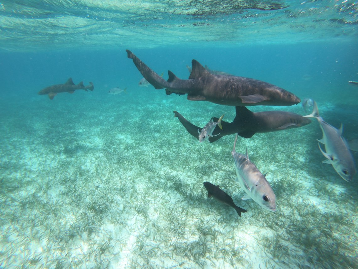 Hol Chan Shark Ray Alley Belize