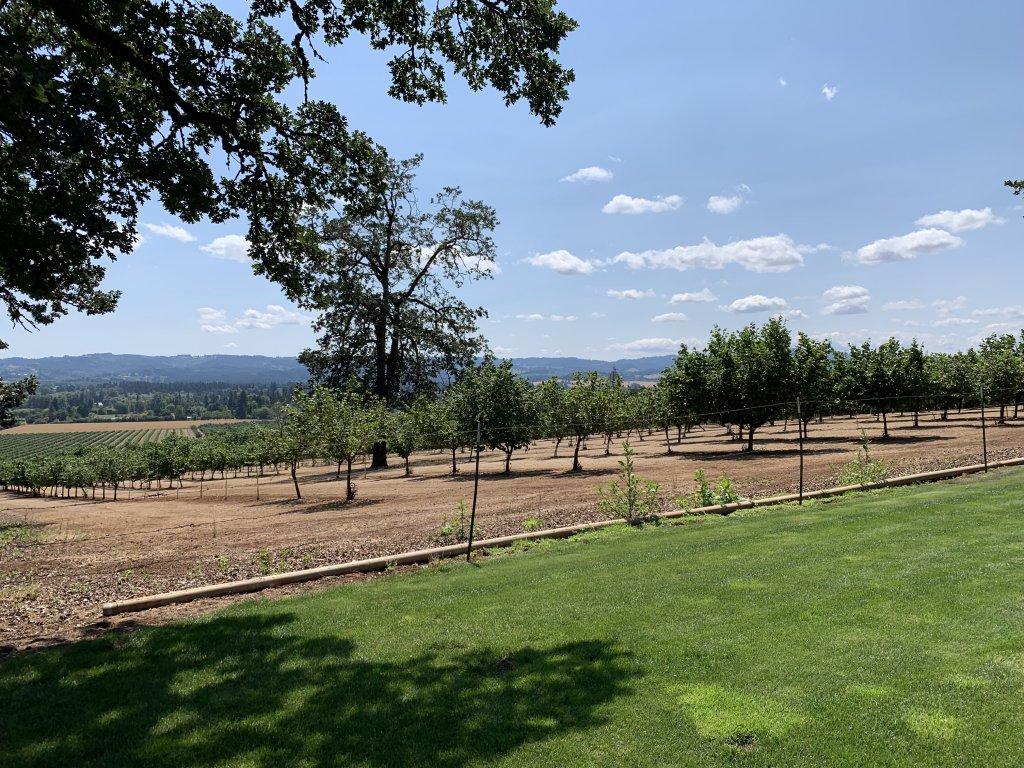 Wine Country near Portland