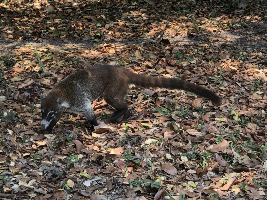 Animals in Tikal